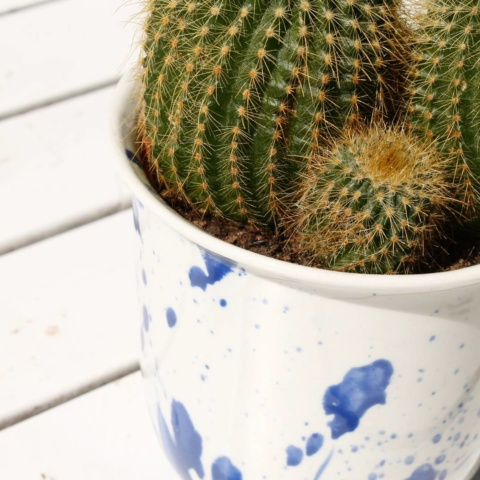 The splash cups, also suitable for a lovely #cactus. #plant #coffecups #pocelain #handmade #studiolorier