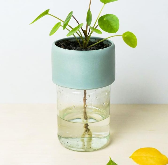 Feed your plant with enough water. Use a normal jar as a base